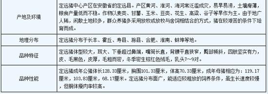 安徽滁州:定远猪(图片)