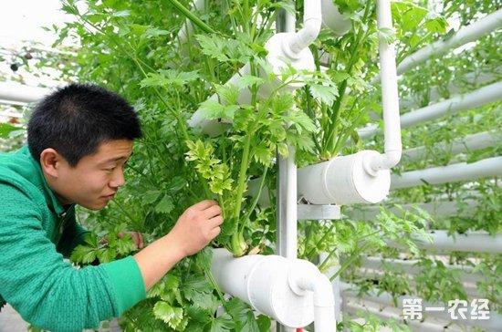 农业科技成果转化,农业科技,农业技术,强农惠农富农政策