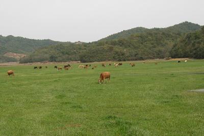 江西推进畜牧业绿色发展转型升级