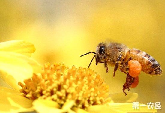 蜜蜂后翅手绘图
