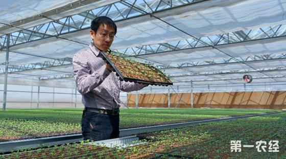 青岛建起1万平方米的现代农业育苗中心