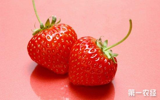 """吉林抚松:小小草莓成""""致富果"""" 亩增收万元"""