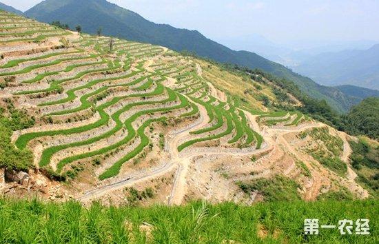 南亚东南亚陆稻协作网成立 推动科技成果国际化_农业