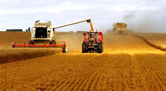保证国家粮食安全决不能搞运动式调整