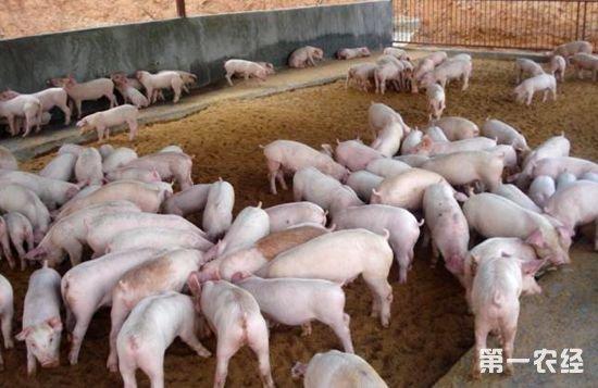 中药治疗猪腹泻