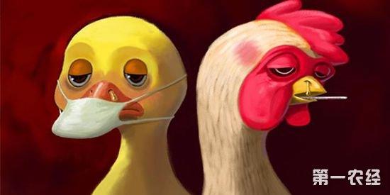 hn9禽流感病疫苗_H7N9禽流感疫苗株已研究完毕
