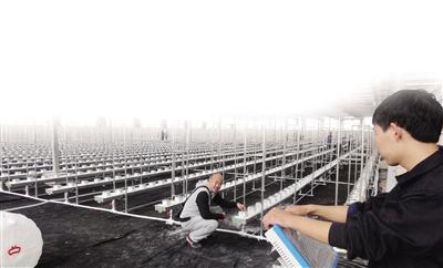 天津滨海新区将调减粮食种植面积新增蔬菜1000亩