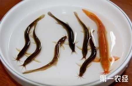 """湖南永州:水产养殖带动百姓尝到""""致富甜头"""""""