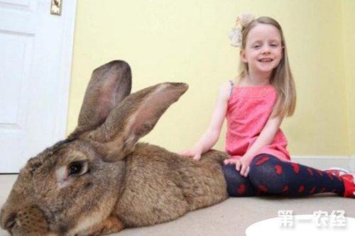 【动物趣闻】世界最大兔子:大流士兔子