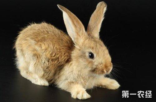 兔子拉稀怎么办 兔子拉肚子拉稀腹泻的治疗方法