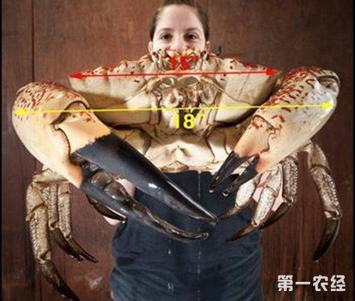 世界上最大的螃蟹有多重 世界上最大的蟹品种是什么
