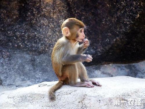 真猴子头像大全可爱