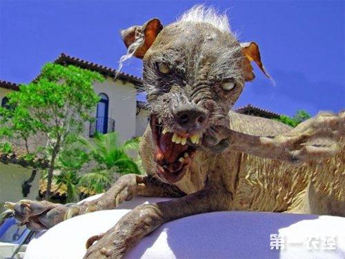 """世界上最大的狗有多重?盘点世界狗之""""最"""""""