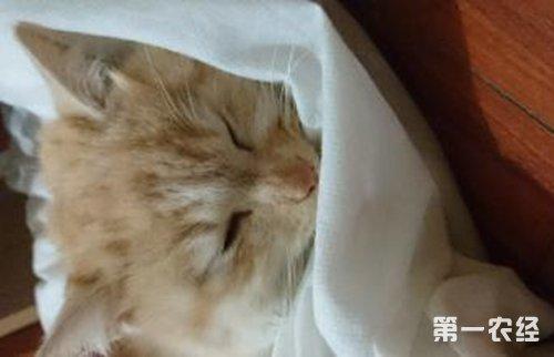 猫的十大生病症状盘点 - 动物