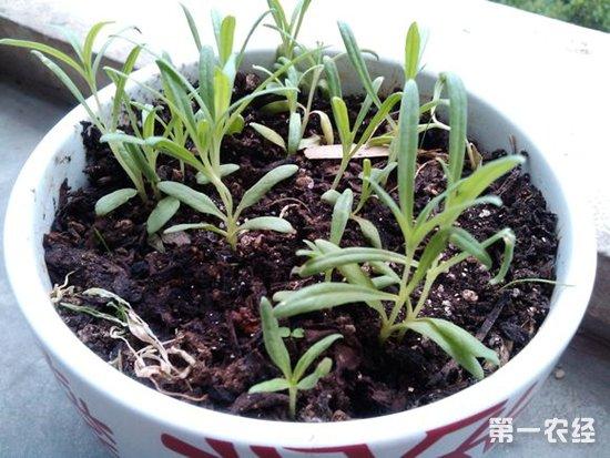 植物幼苗根茎叶结构图