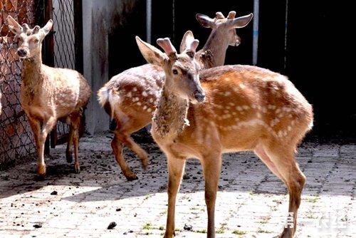 养殖业:我国特养动物有哪些?