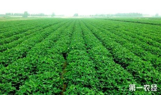 花生播种,花生高产种植,花生种植,花生,花生高产种植密度