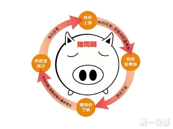 猪吃食卡通