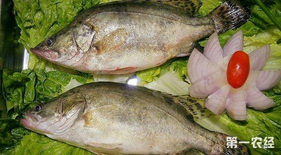 广东食药监公布抽查水产品结果 桂花鱼测出孔雀石绿