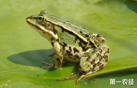 丑东西的财富 拿媳妇钱养青蛙的邓兴龙