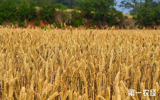 新华社谈扩大农产品进口:满足多元消费需求