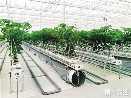 """看海南陵水""""智慧植物工厂""""玩转农业科技"""