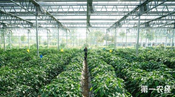 江苏仪征市枣林湾:生态园蔬菜种植基地