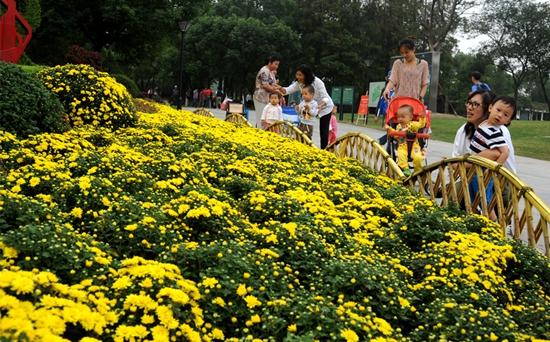 菊花的花期控制方法