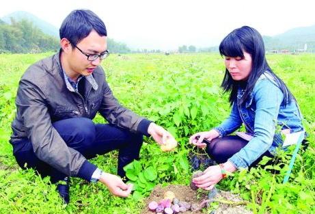 广东惠州平海镇径口村:彩色马铃薯微量元素丰富