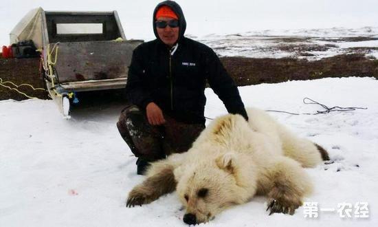"""全球变暖催生""""混血熊""""新物种"""