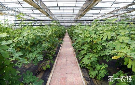 幼儿园植物生长记录封皮