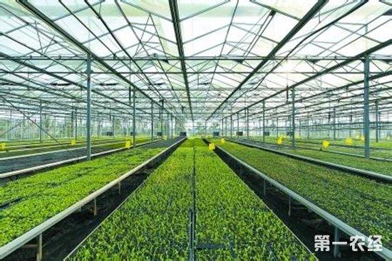 科技助力山东寿光设施蔬菜产业发展