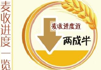 """河南小麦呈""""两增一减""""趋势"""