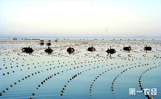 """福州连江投资八亿元打造""""海上牧场"""""""