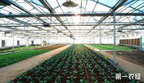 以色列与哈尔滨签署农业合作13项协议