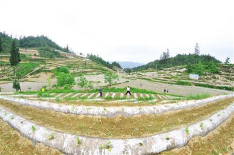 """重庆石柱""""4+X""""助力特色效益农业""""绿色崛起"""""""