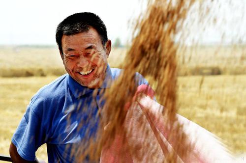 河南原阳:麦田里抢收、抢种,争取再夺丰收年