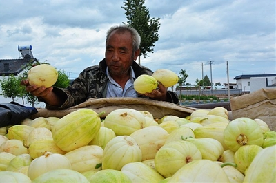 内蒙古巴彦淖尔: 瓜香四溢 农民销售忙