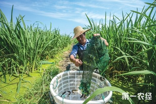 浙江湖州:养龟鳖大镇变身生态田 增收又致富