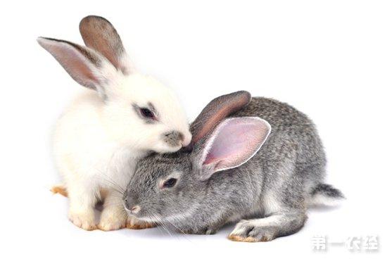 荷兰垂耳兔(短毛垂耳兔)、长毛垂耳兔、泽西长毛兔、狮子兔、荷兰侏儒兔、荷兰兔、安哥拉兔、海棠兔(熊猫兔)、侏儒海棠兔(侏儒熊猫兔)、小型垂耳兔、法国垂耳兔、英国垂耳兔、雷克斯兔、迷你雷克斯(丝绒兔)、喜马拉雅兔、Harlequin(小兔)、波兰兔、新西兰兔、英国兔、佛罗里达州兔、美国黄褐家兔、比利时野兔、大麦丁兔、加州兔、维兰特兔、花明兔、比华伦兔、拉拿兔、香槟兔、银兔、银貂兔、美国金吉拉兔、大金吉拉兔、金吉拉兔、忌廉兔、缎毛兔等。