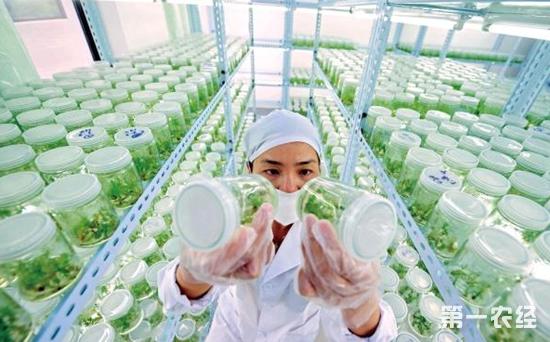 深圳走出一条高科技含量农业现代化道路