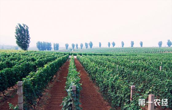 宁夏对秦皇岛葡萄酒产业发展进行考察