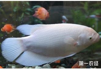 如何预防和减少招财鱼生病?