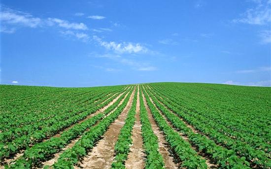 大豆怎么追肥好?
