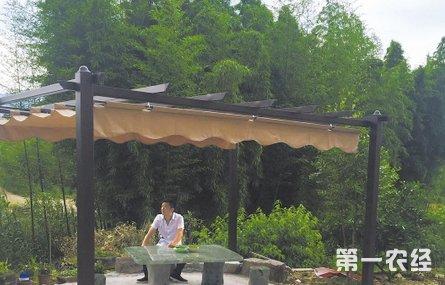 """浙江省台州市:临海""""公园养猪场"""""""