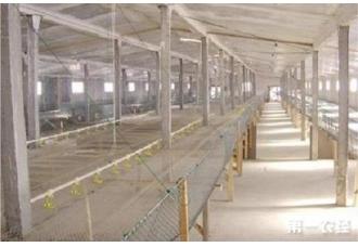 肉鸡舍建筑设计与建筑搭建要求