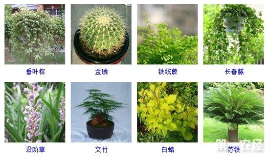 盆栽植物图片及名称