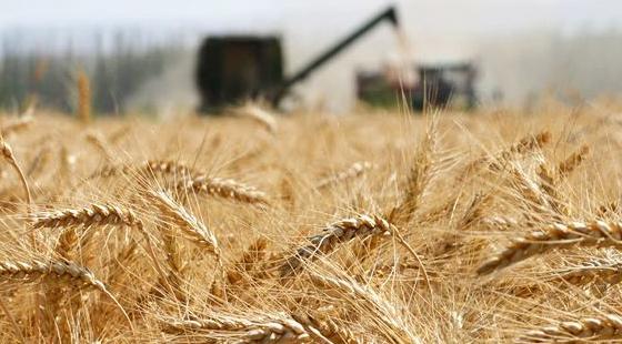 农业部:夏粮丰收农业转方式、调结构取得成效