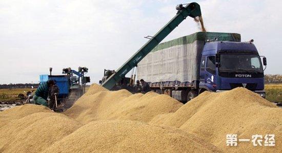 中储粮在6省累计收购最低收购价小麦902万吨