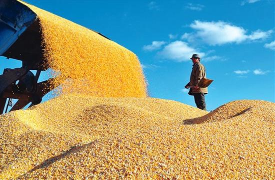 《粮油储存安全责任暂行规定》出台